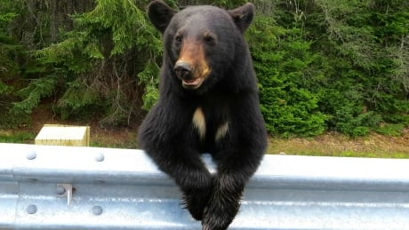 Education is key in preventing bear deaths
