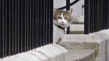 Larry the cat lives at 10 Downing St May 9 2015