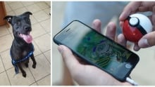 pokemon go animal shelter