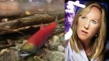 Kristi Miller and salmon