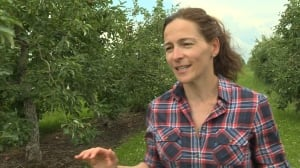 Quebec orchards worry 'very contagious' blight could spell bad apple season