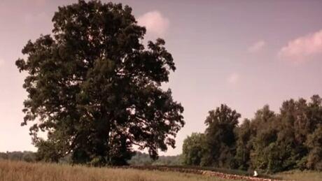 Shawshank Redemption oak tree knocked down