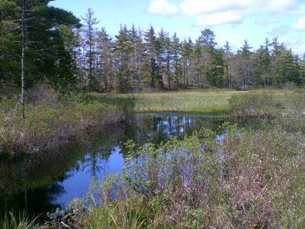 Blanding's turtle habitats