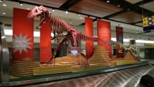Calgary Airport Dinosaurs
