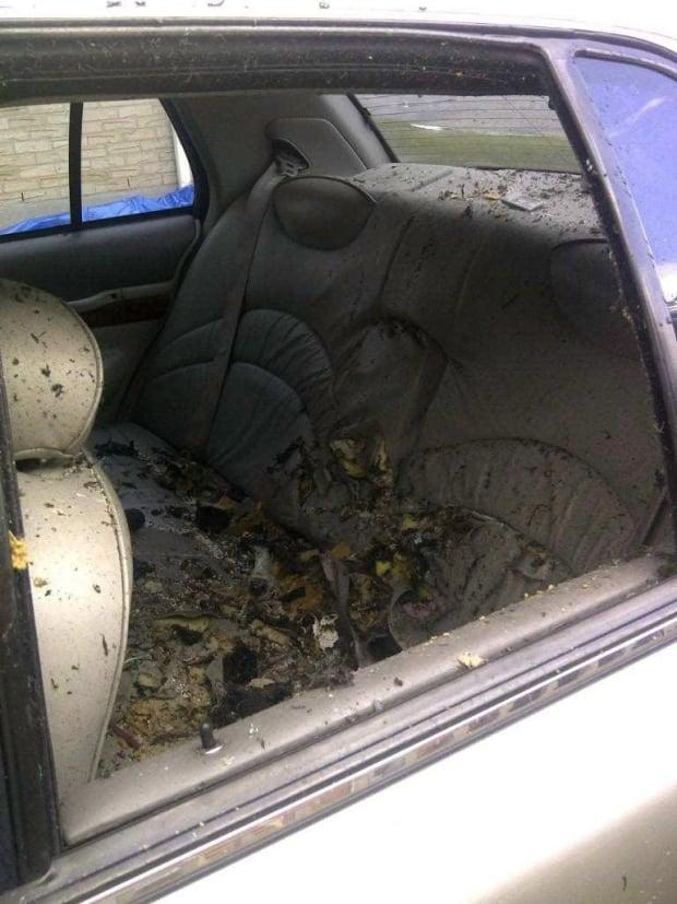 Canada Car Seat Laws Taxi