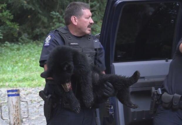 Port Coquitlam black bear attack cub