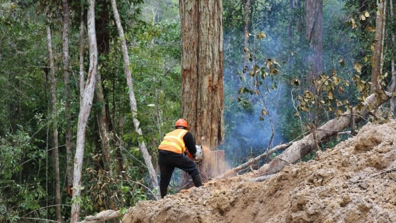 Land clearing in Borneo