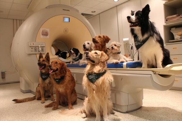 Σκύλοι μελέτη MRI γλώσσα
