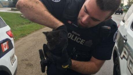 Guelph police rescue kitten