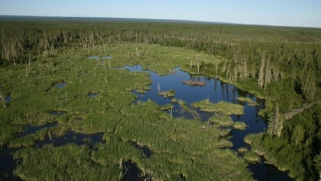 In danger: UNESCO issues warning about Wood Buffalo National Park