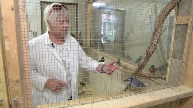 Barbara Adams, a volunteer and board member with the Wild Bird Care Centre in Ottawa, says the sanctuary has received a higher-than-usual number of sick and injured birds in 2016.