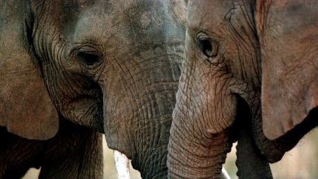 WILDLIFE-CITES/AFRICA-ELEPHANTS