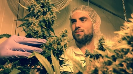 Organic pot grower living the dream in Whistler