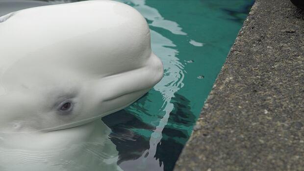 Darkwave - Beluga Whale