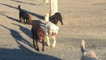Animal fines in Chisasibi 2