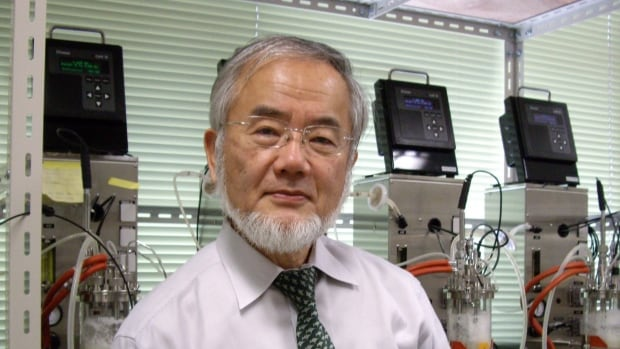 Molecular biologist Yoshinori Ohsumi, seen here in 2012, on Monday received the Nobel Prize in Medicine for his discovery of mechanisms for degrading and recycling cellular components.