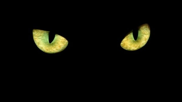 why do animal eyes glow green Do you make these mistakes when you photograph your  which is why some dogs' eyes take on a green glow,  why it's a good idea to look at your pet's eyes.
