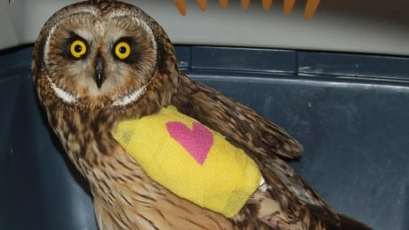 Owl with cast