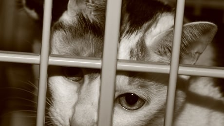 Mission senior gets probation and 15-year animal ban for cruelty