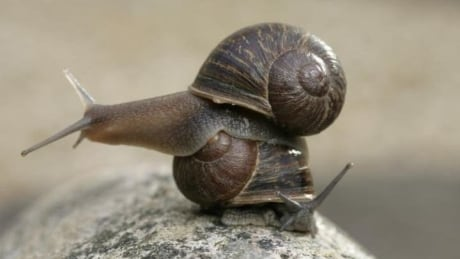 Jeremy the snail is rare, lonely and looking for love
