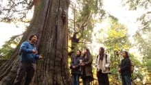 Ancient Forest Alliance Chinese-language Stanley Park Tree Tours
