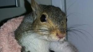 Nutty intruder surprises Oak Bay couple
