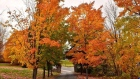 fall in Fredericton