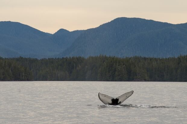 Waters near Bella Bella BC