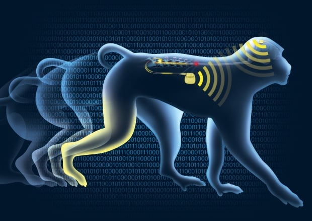 Αποτέλεσμα εικόνας για Primates Regain Control of Paralyzed Limb
