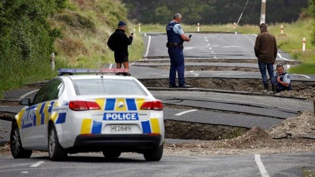 Cows stranded by landslides after New Zealand quake