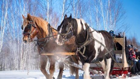Kivi Park Horses