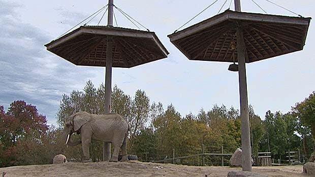 Elephant exhibits go sour