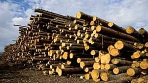 bc-generic-forestry-industry-CP-3885301
