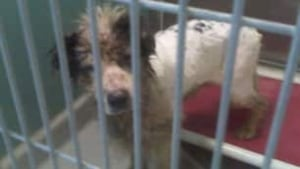 mb-dogs-seized-10717