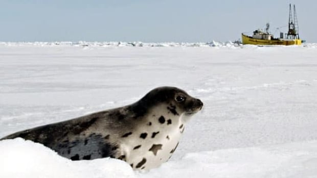 Canada's Fur Institute says a new poll confirms that most Europeans support Canada's seal hunt.