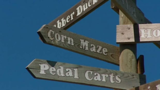 This weekend, get lost in a corn maze.