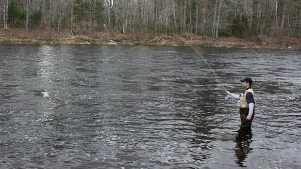 Fisheries and Oceans Canada is considering new rules for Atlantic salmon anglers following low fish numbers on the Miramichi and Restigouche rivers last year.