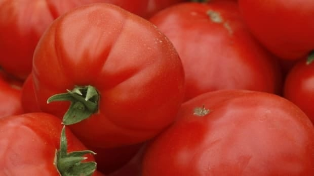 Farmers were looking for an increase in price after a bumper crop of tomatoes last year.