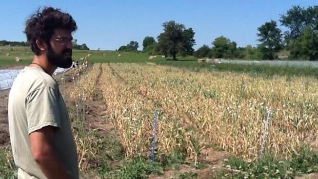 Farms such as Rainbow Heritage Gardens in Cobden, Ont., said 2012 was the worst drought in 40 years.