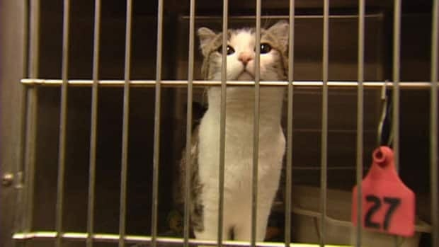The Moncton SPCA had to euthanize 10 cats this week after they were infected by a deadly virus.