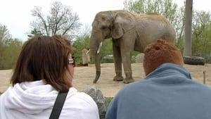 hi-852-elephant-toronto-zoo
