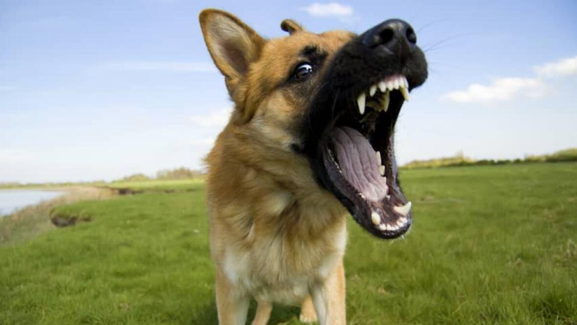People Howling Over Dog Complaint Process Saskatoon
