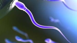 hi-bc-120426-sperm-i-stock