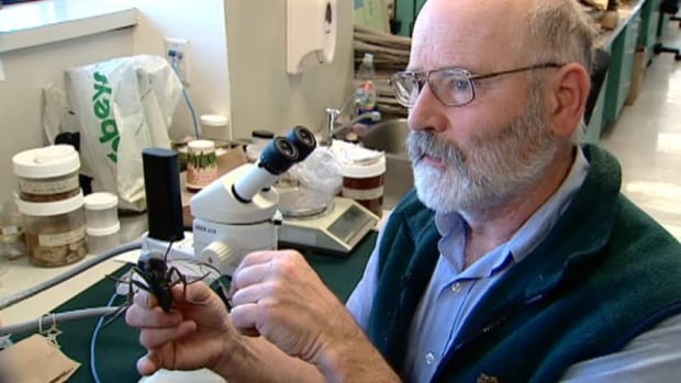 Nova Scotia Museum of Natural History zoologist Andrew Hebda says the conditions were right for a bumpercrop of blackflies this year.