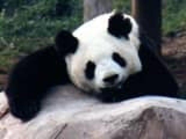 160-panda