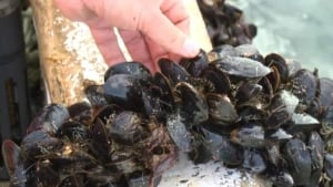 hi-mussels-820