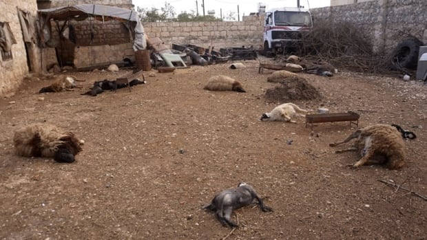 Animal carcasses lie on the ground, killed by what residents said was a chemical weapon attack, in the Khan al-Assal area near the northern city of Aleppo, on March 23. Israel says the nerve agent sarin has been used by the Assad regime.