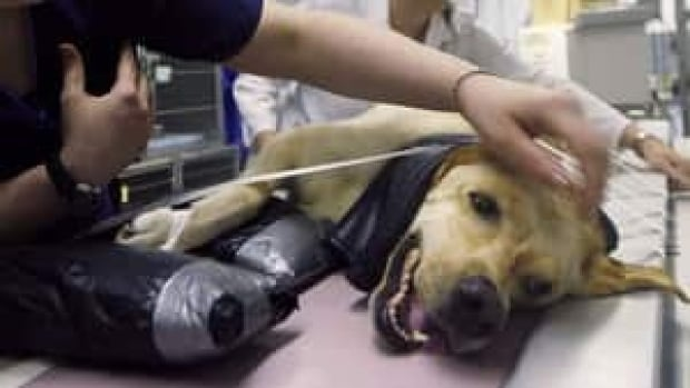 pe-hi-dog-cancer-treatment-4col