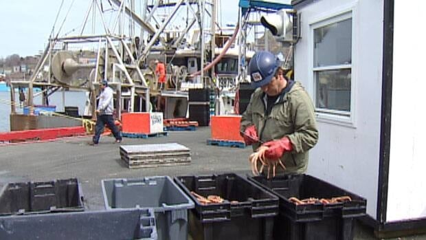 Crab processors say they can't handle the volume of crab being landed at wharves such as this one in St. John's.