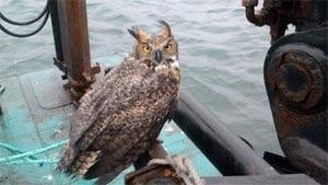 mi-nb-owl-barge-300